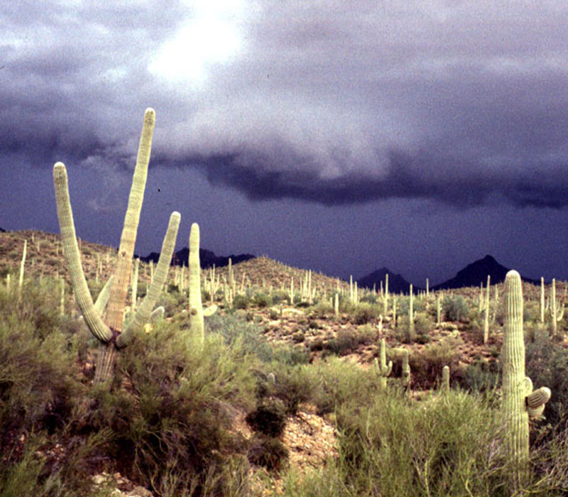 Raining in Tucson photo